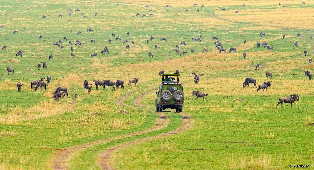 Die Ebenen südlich des Mara