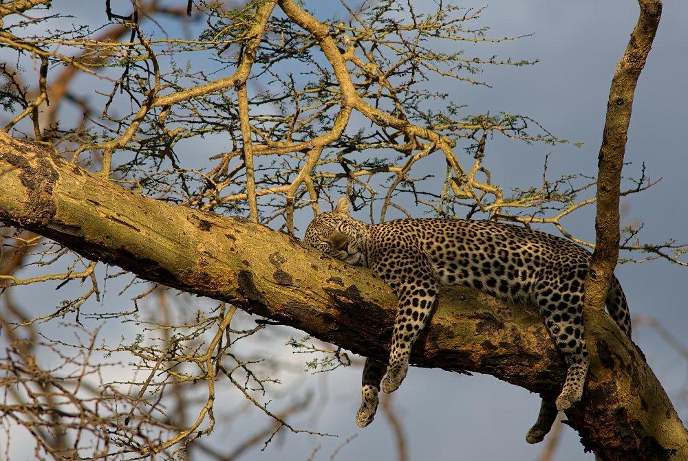 Serengeti 2011