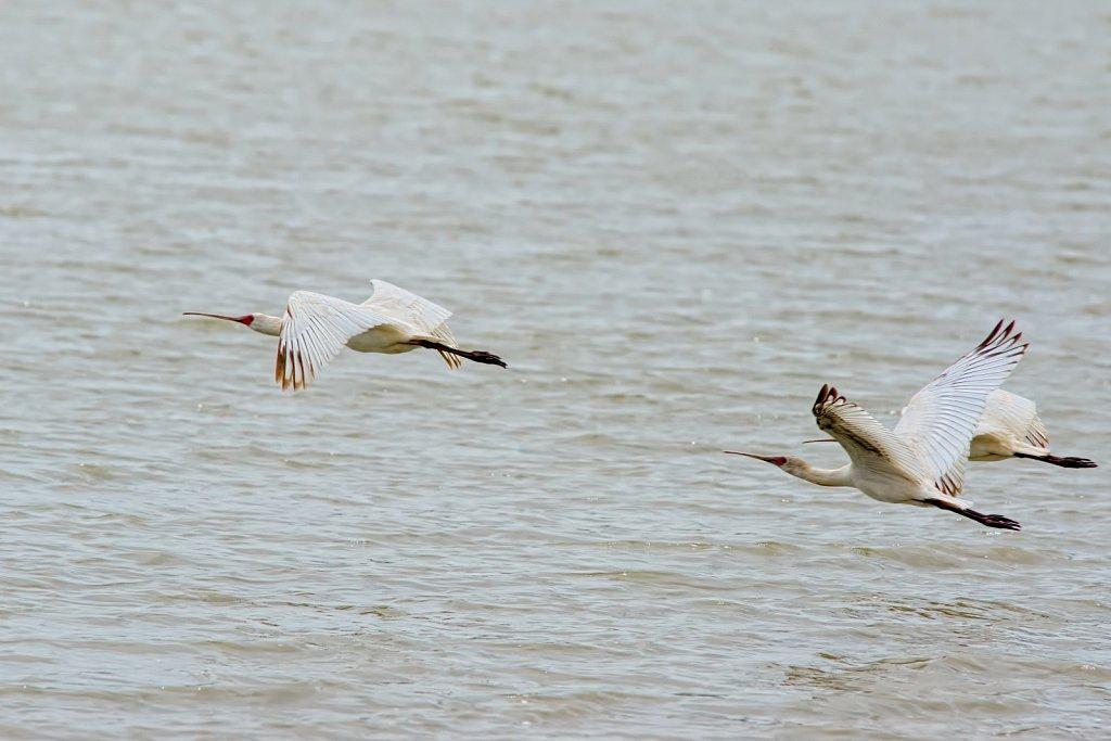 Selous Game Reserve 2012