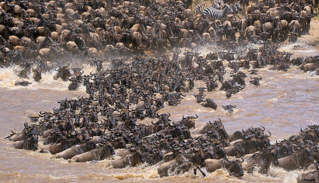 Mara Crossing
